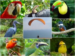 Gleitschirm Flugkollegen Costa Rica
