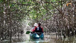 Kajak im Mangrovenwald